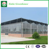 Estufas de /Polycarbonate da folha do PC da extensão da agricultura multi para plantas
