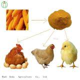 60% 노란 옥수수 글루텐 식사 단백질 분말 닭 음식