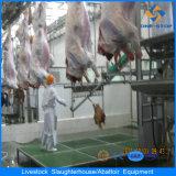 Vieh, das Pflanzengerät für Großverkauf schlachtet