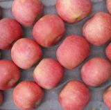 Chinesischer frischer Apple FUJI Apple, Huaniu Apple, goldener Apple