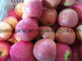 Rojo fresco chino FUJI/Huaniu/Gala/Golden/Qinguan/Jiguan Apple