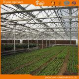 Planting Vegetables를 위한 다중 Span Hollow Glass Greenhouse