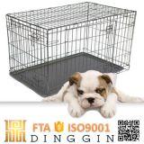 Commerce de gros fournisseurs de chenil de chiens de couleur