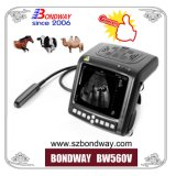Instrument à ultrasons à usage vétérinaire avec les sondes, de diagnostic de l'imagerie par ultrasons, ecography, produits médicaux vétérinaires
