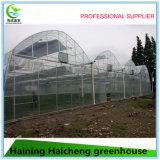 Casa verde comercial del tubo plástico de la hoja de la alta calidad para la venta