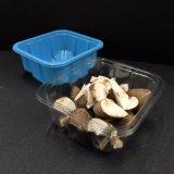 La plastica a gettare toglie la scatola di impaccante il fungo
