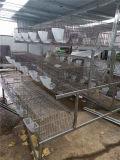Kaninchen-Rahmen für Bauernhöfe