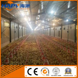 Granja avícola de Equipo para avicultura casa