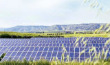 El panel solar de Morego picovoltio/módulo 320W 325W con tecnología alemana