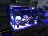 산호초 해병을%s 24W 가득 차있는 스펙트럼 원격 제어 수족관 LED
