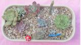 정원과 집 훈장 대나무 섬유 화분 (BC-FP1025)