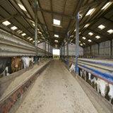 低価格の高品質と取除かれるプレハブの鋼鉄Strucure牛