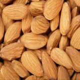 Almond/Apricot Pit met Uitstekende kwaliteit
