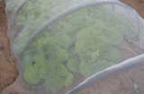 Новые Virgin HDPE дешевые сад против насекомых-Net