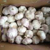 4.5cm, 5.0cm, aglio bianco normale di 5.5cm