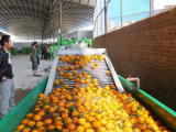 大型の使用された産業果物と野菜のブラシの洗浄の機械装置