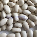 正方形の形の最上質の白い腎臓豆
