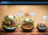Tisch-Dekoration-Kugel-Glasblumen-Pflanzer-Vaseterrarium-Behälter