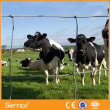 Rete fissa galvanizzata del campo del bestiame lavorata a maglia collegare della giuntura di cerniera