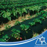 Tissu non-tissé de la lutte contre les mauvaises herbes Pp Spunbond avec traité aux UV