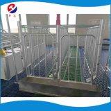 A gestação Stall Equipamento de suínos engradados de gestação galvanizados a quente