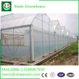Venlo Polytunnel UV 취급된 유리제 개골창에 의하여 연결되는 열대 온실