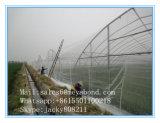 [هدب] [أغريكلتثر] مضادّة أرقة شبكة مضادّة حشية شبكة حشية شبكة نافذة شاشة مصنع