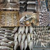 Armoire de séchage du poisson 8-75 C/déshydrateur ALIMENTAIRE Machine/poisson Four sécheur