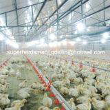 Strumentazione automatica superiore dell'azienda avicola dell'insieme completo