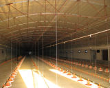 Tipo de controle automático Chicken House with Equipments