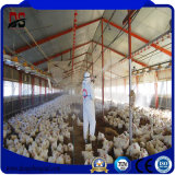 Type léger construction matérielle préfabriquée pour la ferme de poulet