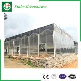 Casa verde del palmo de los vehículos/de las flores de la hoja multi de la PC