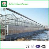 Invernadero modificado para requisitos particulares alta calidad de la hoja de la PC con el sistema hidropónico para la venta