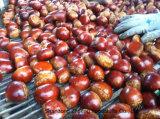 Frische Kastanien, China-Kastanien, Kastanien mit dem neuen Getreide, das Qualität exportiert