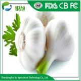 La Chine usine d'alimentation de l'ail frais en vrac Blanc pur
