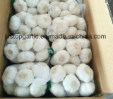Alho branco normal da colheita nova/puro vermelho fresco chinês