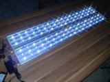 162W White+Blue LED Aquarium-Licht für Fisch-Becken