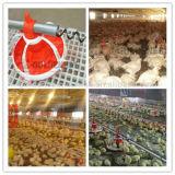 Pollo Production Equipment per Livestock Farming (JCJX-119)
