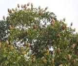 中国の工場は空のフルーツのエキスを提供する