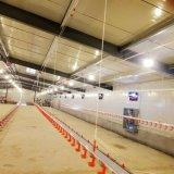 Equipamento de agricultura de frango automática para a venda de frangos de corte