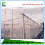 야채 또는 꽃 또는 농장 또는 정원 필름 녹색 집