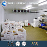 Hot Selling Cold Room/Cold Storage Room/Refrigerator