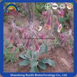 Выдержка клубня корня Rehmannia естественной травяной выдержки слипчивая