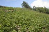 중국 의약 나물 적용되는 Unigrow 토양 조절기