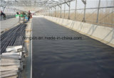 Membrana do HDPE, HDPE Geomembrane, folha do HDPE, película do HDPE, forro do HDPE