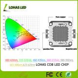 LED 점화 12-36V 고성능 10W-100W SMD 옥수수 속 LED 칩