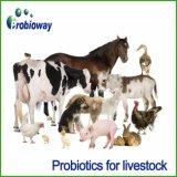 El Ganado Lechero OEM Bacillus probióticos aditivo para piensos animales producen vitamina