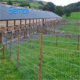 Rete fissa galvanizzata di /Animal della rete fissa del campo del TUFFO caldo/rete fissa del bestiame