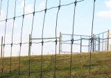 Azienda agricola che recinta maglia riparata annodata catturando con la rete la rete fissa del campo