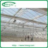 Glasgewächshaus für Kopfsalat Nft System